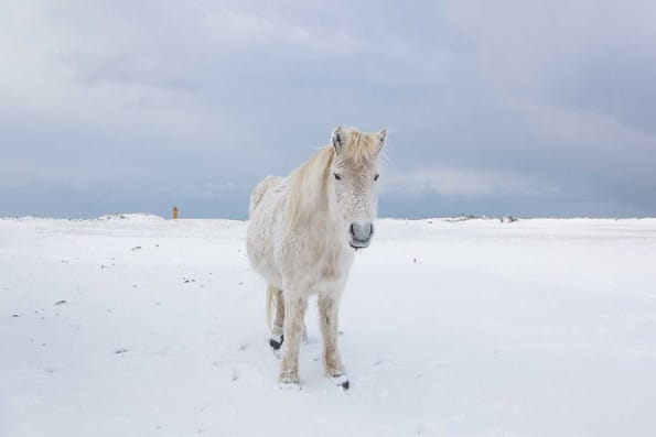white horse on snow