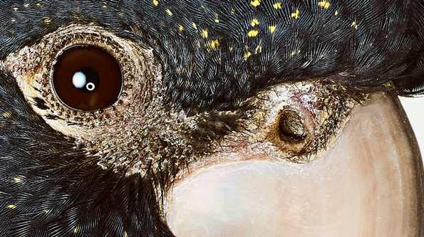 Bronwyn Kidd bird 5