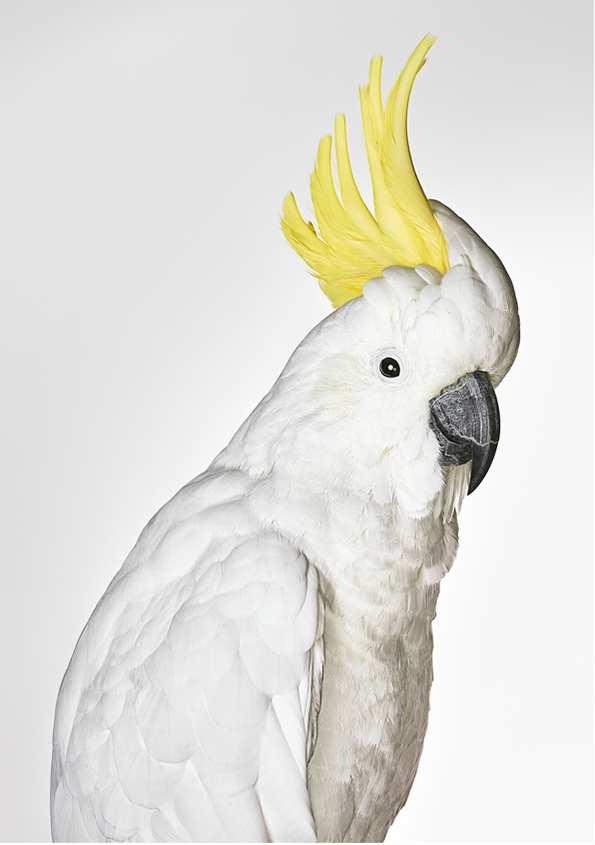 Bronwyn Kidd bird 2
