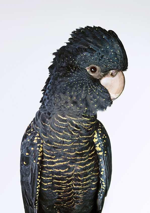 Bronwyn Kidd bird 3