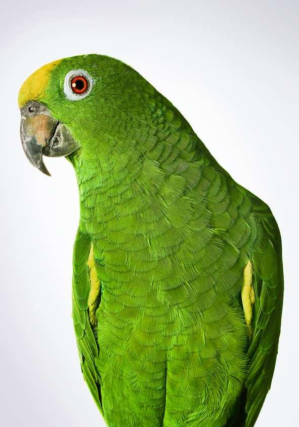 Bronwyn Kidd bird 4